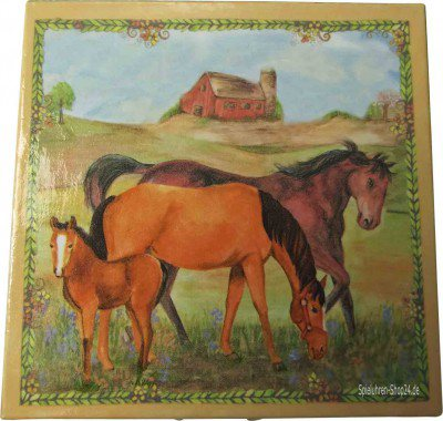 Zahndose Pferde auf der Ranch von Enchantmints